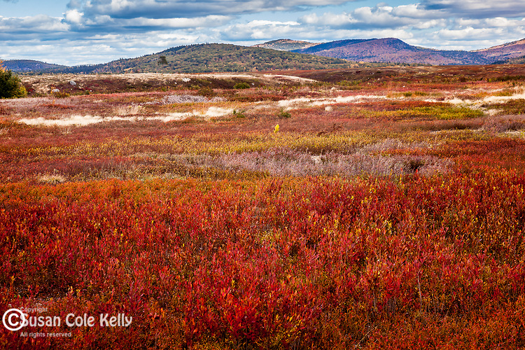Autumn colors the blueberry barrens in Franklin, Hancock County, ME