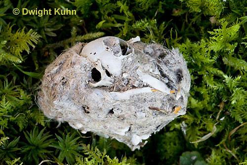OW09-507z  Owl Pellet with animal bones inside, Great Horned Owl