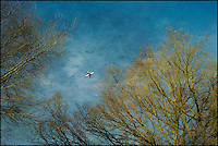 Aeroplane and trees in Richmond Park http://www.vivecakohphotography.co.uk/2012/01/24/a-walk-in-richmond-park/