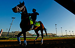 LOUISVILLE, KY - APRIL 30: Magnum Moon heads back to the barn after exercising in preparation for the Kentucky Derby at Churchill Downs on April 30, 2018 in Louisville, Kentucky. (Photo by Scott Serio/Eclipse Sportswire/Getty Images)