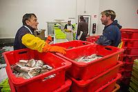 France, Gironde (33),Bassin d'Arcachon, Arcachon:  Port de pêche, la criée, déchargement des bateaux de pêche  //  France, Gironde, Bassin d'Arcachon, Arcachon: Fishing harbor, the fish market, unloading fishing boats
