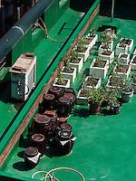 Dachgarten mit Blumen und Kimchi-Töpfen in Seoul, Südkorea, Asien<br /> roof garden with plants and Kimchi pottery  in Seoul, South Korea, Asia