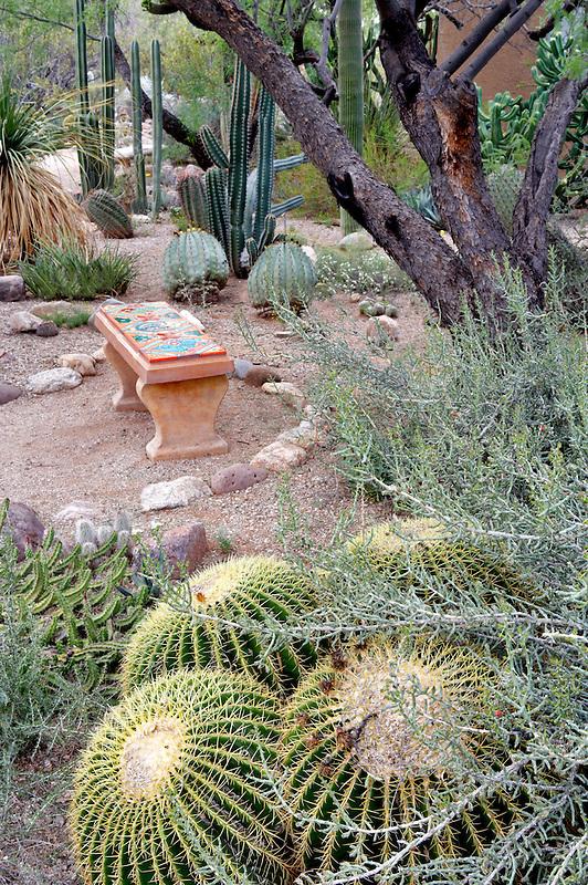 Cactus garden with bench in Tucson Botanical Gardens. Tucson. Arizona