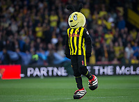 Harry the Hornet (Watford Mascot) during the Premier League match between Watford and Southampton at Vicarage Road, Watford, England on 23 April 2019. Photo by Andy Rowland.<br /> .<br /> Editorial use only, license required for commercial use. No use in betting,<br /> games or a single club/league/player publications.'