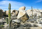 Mexico, Baja California, Cardon Cactus at Catavina Rock Garden
