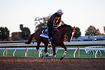 November 4, 2020: Mr Freeze, trained by trainer Dale L. Romans, exercises in preparation for the Breeders' Cup Dirt Mile at Keeneland Racetrack in Lexington, Kentucky on November 4, 2020. Gabriella Audi/Eclipse Sportswire/Breeder's Cup/CSM