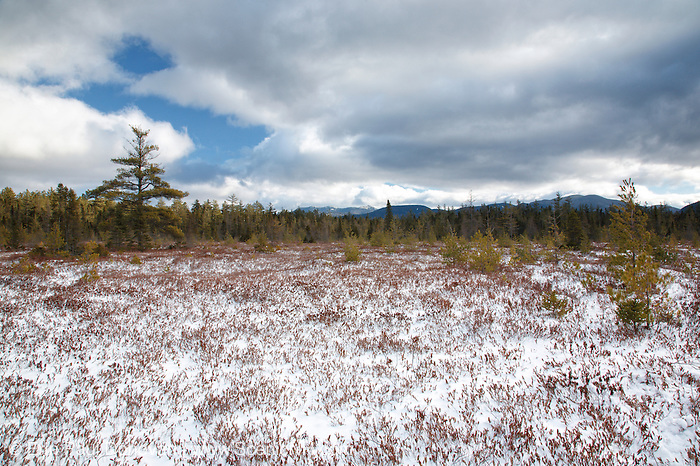 """Peatland community near Church Pond in the White Mountains, New Hampshire USA. This area is referred to as """"the bog"""" and was part of the Swift River Railroad era, which was a logging railroad in operation from 1906-1916. Mount Chocorua is way off in the distance."""
