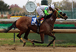 LOUISVILLE, KY -NOV 24: Lady Fog Horn (#3, Albin Jimenez) wins the G2 Falls City Handicap at Churchill Downs, Louisville, Kentucky. Trainer Anthony J. Granitz, owner The Elkstone Group, LLC (Stuart Grant) (Photo by Mary M. Meek/Eclipse Sportswire/Getty Images)
