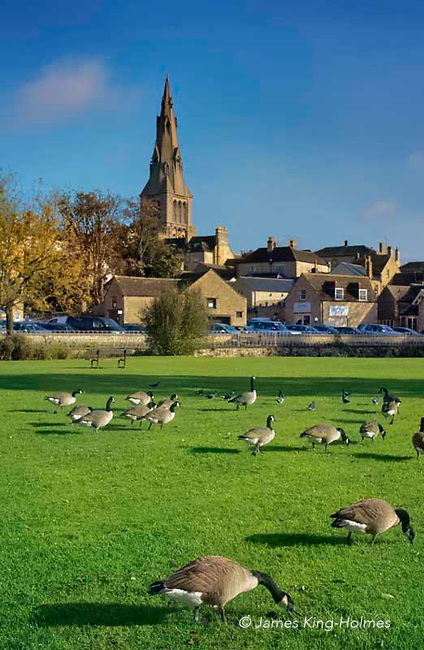 The Town Meadows is Common Land in Stamford, Lincolnshire affected by the Enclosures act in 1871. This area of land lies between two arms of the River Welland and forms a large part of the flood defences of the area. The floods deposit nutrients to the land and the lush grass provides excellent grazing for many geese.