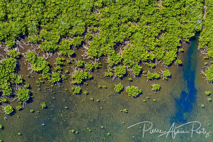 Poum, mangrove