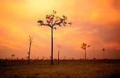Xingu, Brazil. Rainforest land which has been cleared and burnt for agriculture, leaving dead and dying trees with red sky.