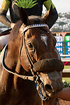 """DEL MAR, CA  JULY 28: #5 Ransom the Moon,  after winning the Bing Crosby Stakes (Grade l) Breeders' Cup """"Win and You're In Sprint Division"""" on July 28, 2018 at  Del Mar Thoroughbred Club in Del Mar, CA. (Photo by Casey Phillips/Eclipse Sportswire/Getty Images)"""