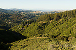 Houses encroaching into northern coastal scrubland and maritime chaparral, Tamalpais Valley, Mill Valley, Bay Area, California