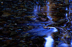 Time exposure of water passing over river bottom, American River, Cascade Mountaines