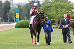 HOT SPRINGS, AR - April 14: Streamline #6 with jockey Chris Landeros aboard walks in the infield paddock prior to the Apple Blossom Handicap at Oaklawn Park on April 14, 2017 in Hot Springs, AR. (Photo by Ciara Bowen/Eclipse Sportswire/Getty Images)