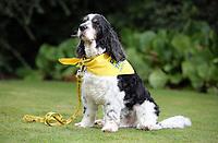2017 09 10 PTA dog, Swansea, UK