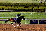 November 3, 2020: Casa Creed, trained by trainer William I. Mott, exercises in preparation for the Breeders' Cup Mile at Keeneland Racetrack in Lexington, Kentucky on November 3, 2020. Gabriella Audi/Eclipse Sportswire/Breeder's Cup/CSM