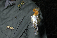 Operazione Pettirosso. Servizio di prevenzione e repressione del bracconaggio ai danni del Pettirosso, utilizzando archetti e reti. Nella zona di Brescia, in particolare la Val Sabbia e la Val Trompia..Robin red breast operation. Service of prevention and repression of poaching against the Robin red breast, using arches and networks. In the area of Brescia, in particular, Val Sabbia and Val Trompia...