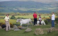 German tourists and Dartmoor ponies, Dartmoor, Devon.