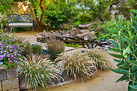 Calamagrostis foliosa, California native leafy reedgrass flowering in small backyard drought tolerant garden with pond water feature
