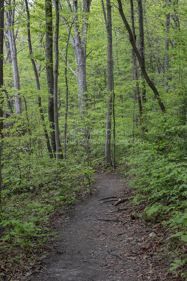 New River Gorge National Park, West Virginia.  Endless Wall Trail Footpath.