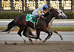 29 November 2008:  Although later placed second by disqualification, Harlem Rocker (Eibar Coa aboard) was able to hold off Tale of Ekati (Edgar Prado aboard) during the final strides of the grade 1 Cigar Mile Handicap at Aqueduct Racetrack in Ozone Park, New York.