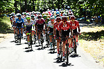 The peloton, with Team Sunweb on the front, in action during Stage 5 of the 2019 Tour de France running 175.5km from Saint-Die-des-Vosges to Colmar, France. 10th July 2019.<br /> Picture: ASO/Alex Broadway | Cyclefile<br /> All photos usage must carry mandatory copyright credit (© Cyclefile | ASO/Alex Broadway)