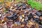 Artifacts (horseshoes and peavey) at an old logging camp along the abandoned Woodstock & Thornton Gore Railroad in Livermore, New Hampshire during the autumn months. Operated by the Woodstock Lumber Company, this was a logging railroad in operation from 1909-1914 in the towns of Woodstock, Thornton Gore, and Livermore. The removal of historic artifacts from federal lands without a permit is a violation of federal law.