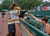 21 July 2019: Boston Bruins Mascot Blades interacts with a fan prior to a minor league baseball game between the Vermont Lake Monsters and the Tri-City ValleyCats at Centennial Field in Burlington, Vermont. The Lake Monsters rallied to defeat the ValleyCats 6-3 in NY Penn League play. Mandatory Credit: Ed Wolfstein Photo *** RAW (NEF) Image File Available ***