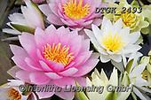 Gisela, FLOWERS, BLUMEN, FLORES, photos+++++,DTGK2493,#f#, EVERYDAY