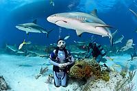 Caribbean reef shark, Carcharhinus pereziii, and woman scuba diver, Bahamas, Caribbean Sea, Atlantic Ocean