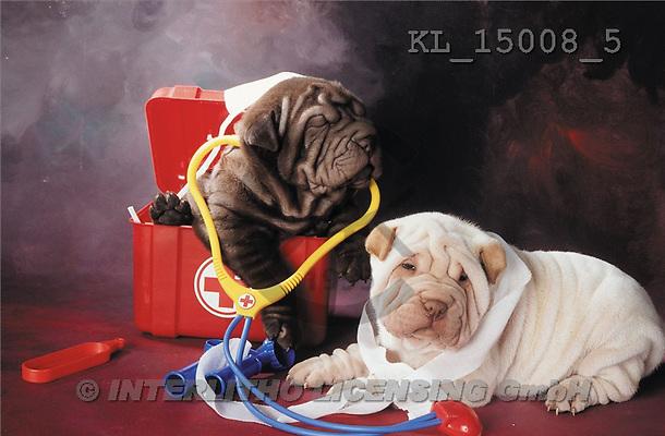 Interlitho, Alberto, ANIMALS, dogs, photos, 2 shar peis, doctor(KL15008/5,#A#) Hunde, perros