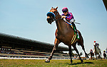 """Obviously with Joe Talamo aboard wins the 2013 running of the Shoemaker Mile Stakes, a Breeders' Cup """"Win and You're In"""" race at Betfair Hollywood Park in Inglewood, CA on June 15, 2013. (Alex Evers/ Eclipse Sportswire)"""