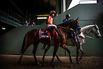 ARCADIA, CA - FEBRUARY 04: Hoppertunity #1, ridden by Flavien Prat walks to the track for the San Antonio Stakes at Santa Anita Park on February 4, 2017 in Arcadia, California. (Photo by Alex Evers/Eclipse Sportswire/Getty Images)