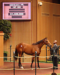 September 10, 2014:   A bay yearling filly by Dubawi out of Epsom Oaks winner Casual Look (Red Ransom)sells to Flaxman Stables, Ireland for $1,450,000.  She was the sales topper of the third session of Book 1.  Consigner Lane's End, Agent.  ©Mary M. Meek/ESW/CSM
