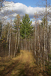Trail through the woods in northern Wisconsin