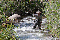 Chasing Greenback Cutthroat Trout in RMNP with a beer in the Holster