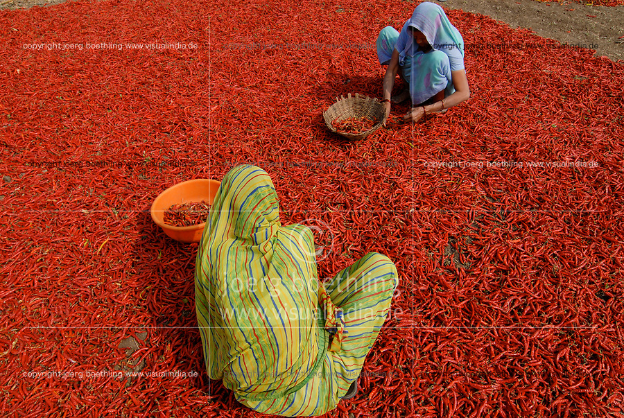 INDIA Madhya Pradesh , harvest and drying of red chilies at farm / INDIEN, Ernte und Trocknung von roten Chilies