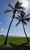 Flic en Flac, Mauritius. La Pirogue tourist resort. Two palm trees by sea.