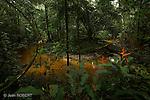Sau?l au coeur de la fore?t guyanaise.Ballade de la Roche Bateau en suivant la crique Nouvelle france.Guyane.Tropical forest in french guyana