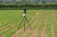 10-6-2021 Aphid traps and a weather station in crop of sugar beet in Rutland<br /> ©Tim Scrivener Photographer 07850 303986<br />      ....Covering Agriculture In The UK....