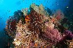 Colourful crinoids and soft corals adorn a reef in Raja Ampat, West Papua, Indonesia