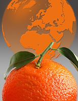 Produzione di arance esportate in tutto il mondo..Production of oranges exported worldwide.....
