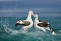 Wandering Albatross Dispute