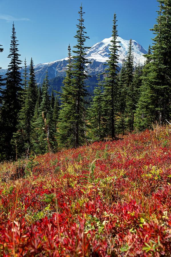 Mount Rainier above autumn colored meadows, Naches Peak Loop Trail, Mount Rainier National Park, Washington, USA