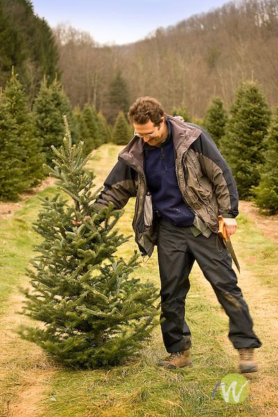 Man cutting Christmas tree.