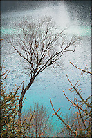 Tree and ripples, China.