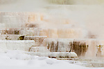 Terraced geothermal hot spring in winter, Mammoth Hot Springs, Yellowstone National Park, Wyoming