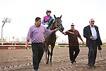 Itsmyluckyday and connections head to the winners circle after winning Holy Bull (G3) at Gulfstream Park.  Hallandale Beach Florida. 01-26-2013