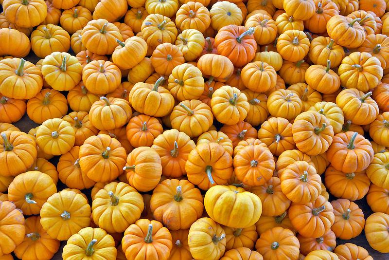 Small pumpkins from roadside stand. Near Portland. Oregon
